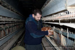 OPEN RESCUE OF 16 HENS (Czech Republic)