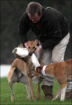 "Coursing clubs call this ""conservation"""