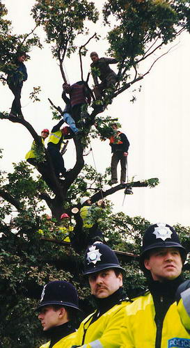 Treetop eviction outside Euphoria