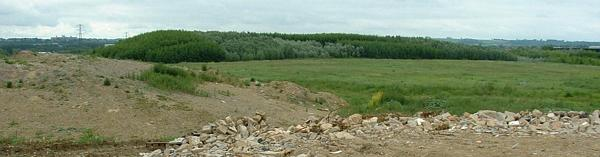 Phase 1 of Shaw forest, viewed from phase 2 (not planted yet)
