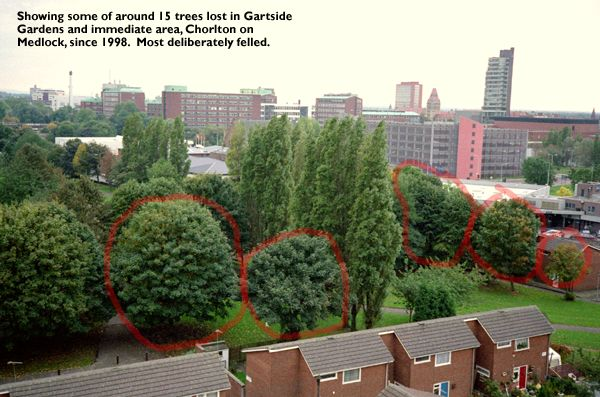 Uk Indymedia Mature Trees Felled In Manchester