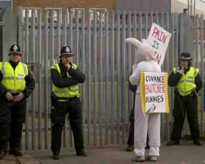 As its easter, the police were treated to a nice rabbit talking to them...