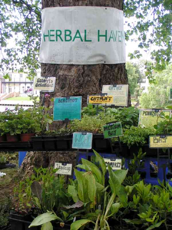 Shops - Herbal Haven A