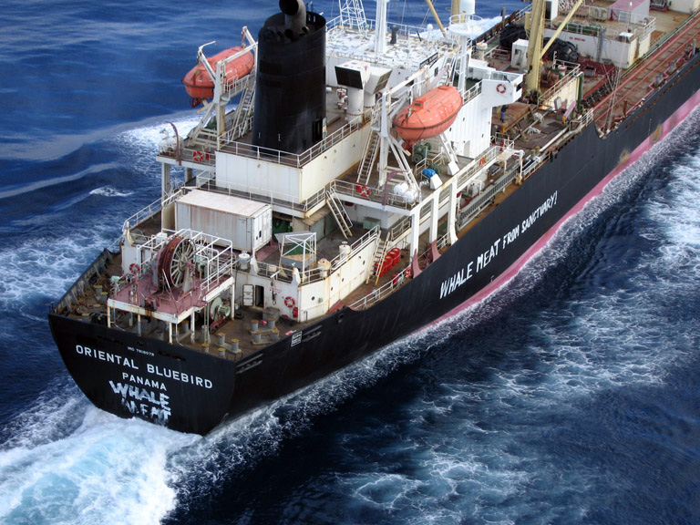 Japanese Whaling Ship Rams Greenpeace Vessel In Southern