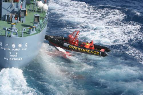 Greenpeace entangled between whale and Japanese whaling vessel