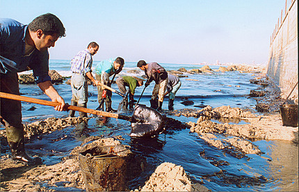 Polluted beach in Lebanon