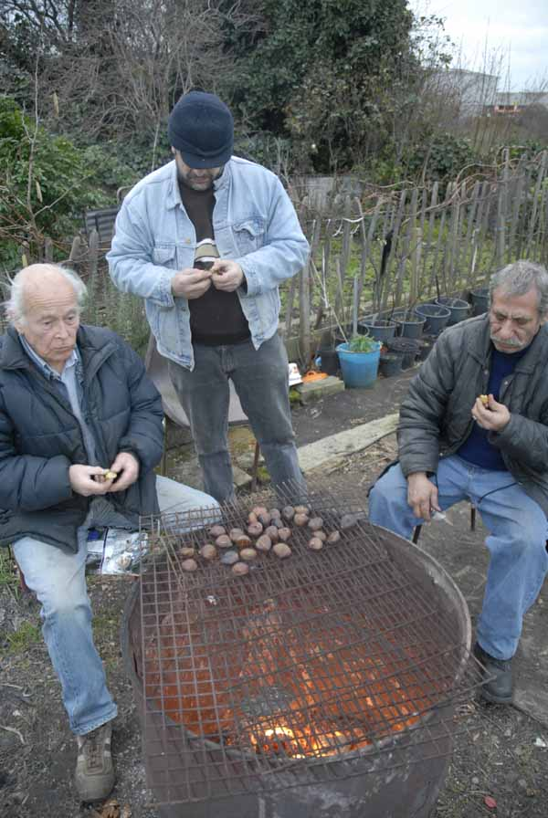 Old timers on the allotment roast chesnuts