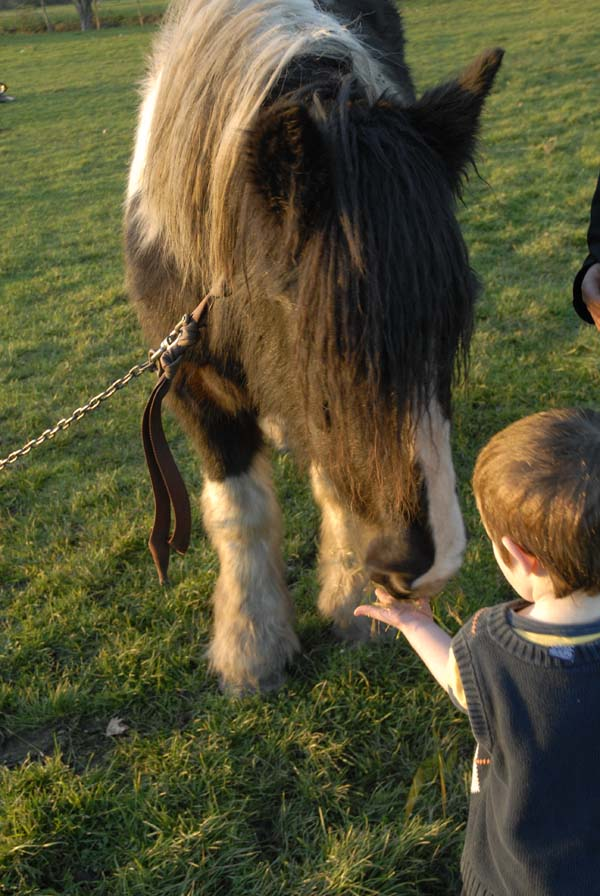 Kids on Marsh Lane Fields enjoy feeding the horses.
