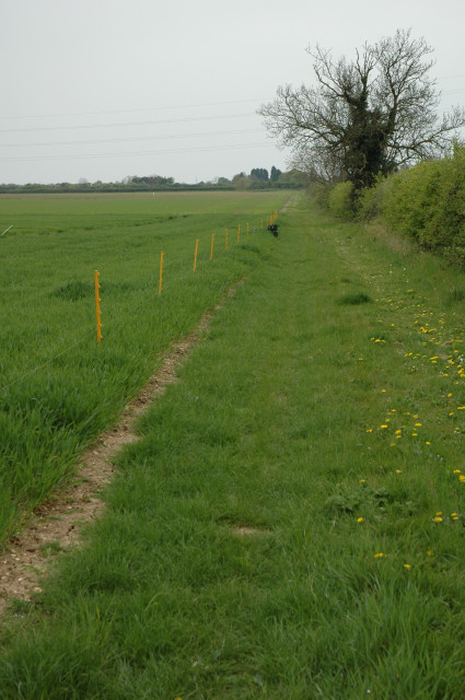 This lane runs along the eastside of Girton Woods. The fields are just ahead.