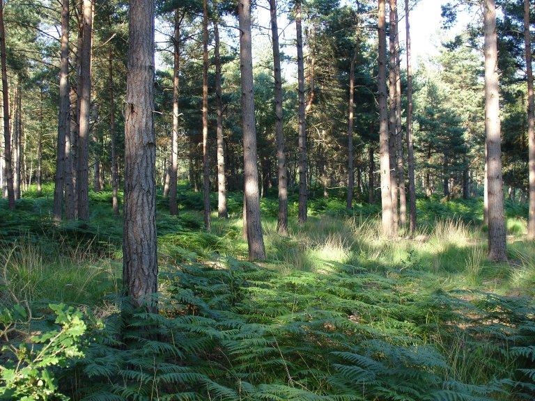 Hawley woods