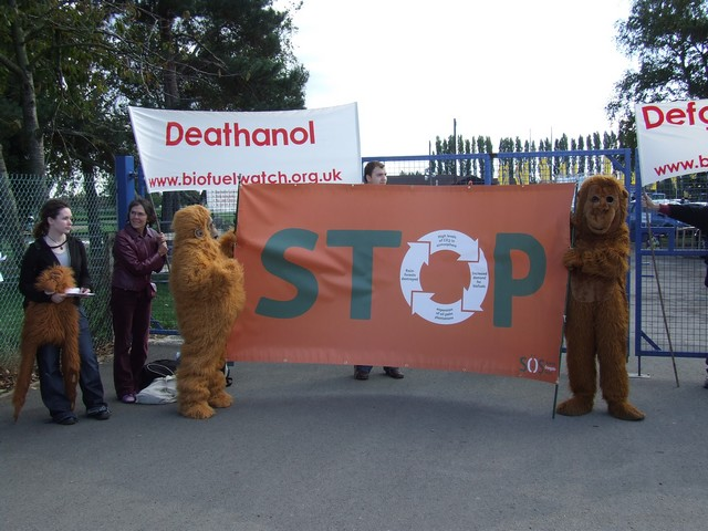 Orangutans turned up to support us
