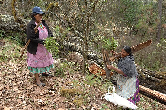 Women from San Isidro collect medicinal herbs in the threatened forest.