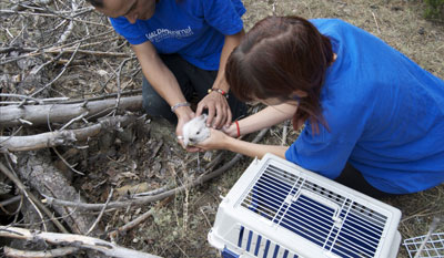 OPEN RESCUE OF 31 RABBITS (Spain)