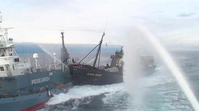 Yushin Maru 3 rammed by Sea Shepherd (Photo: ICR)