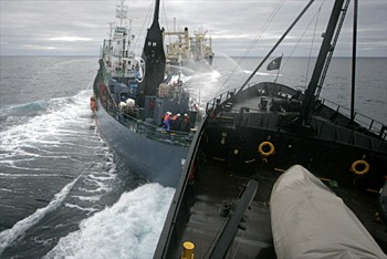 Yushin Maru 2 rammed by Sea Shepherd (Photo: Sea Shepherd)