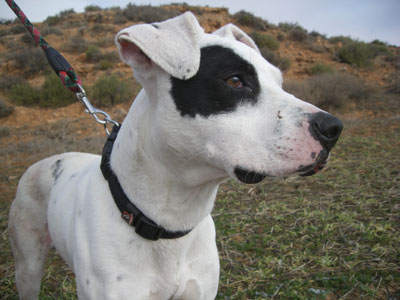 Dog rescued from abuse in Spain
