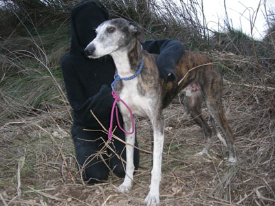 GREYHOUND RESCUE DEDICATED TO JAKE CONROY (Spain)