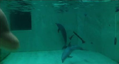 The conditions at the Münster dolphinarium are very poor