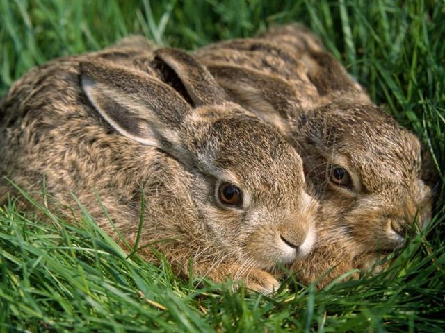Baby hares...
