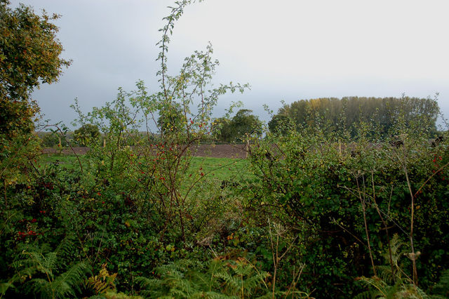 Site through the hedgerow